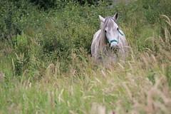 IMG_6116 (Pablo Alvarez Corredera) Tags: burro gato gata gallina rural medio vida hierba alta pradera praderio espigas arbol arboles burrito orejas orejitas gatita