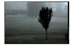 apolloAARAPAN400011expo (Ilia Farniev) Tags: apollo angst arboreal mindeparken aarhus agfa rodinal iliafarniev silverfast socialdeprivation glitch 杞 tufu icing ap400 finemist tachu vision wayofliving veil 事 计