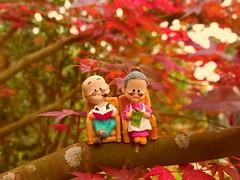 Old story (s8841518) Tags: taipei taiwan autumn maple love