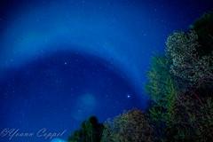 stars sky (yoann coppel) Tags: europe france french hautesavoie ciel sky nuit night nikon samyang étoiles
