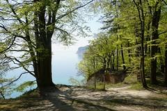 DSC09130 (Olaf Biedron) Tags: rügen buchen steilküste buchenwald baum tree steepcoast