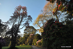 Kilmacurragh vista. (mcgrath.dominic) Tags: rhododendrons botanicgardens kilmacurragh cowicklow