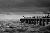 wild boys (stocks photography.) Tags: michaelmarsh photographer whitstable photography coast seaside harbour wildboys