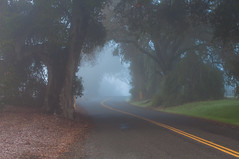The Road Between Spring And Fall (blueteeth) Tags: road rural country yellowline mist trees fallenleaves peaceful quiet treetunnel