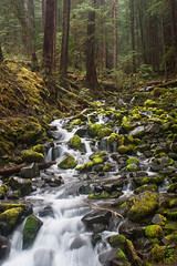 over the hills (Eyes of the Muse) Tags: ivyhutchison washington sol duc olympic national park waterfall riparian rainforest temperate canoneos20d canon20d canon landscape waterscape falls shutter speed extended exposure smooth silky green woods nature wild forest port angeles april 2017