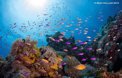 Coral 2 © Brad Holland 2014