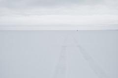 nothing is everything (Mindaugas Buivydas) Tags: lietuva lithuania color winter february minimal minimalism nemunodeltosregioninisparkas nemunasdeltaregionalpark kuršiųmarios curonianlagoon ice cold frost snow mindaugasbuivydas delta nemunasdelta songofafavoriteband