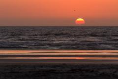 Butler beach sunrise (James Kellogg's Photographs) Tags: butler beach st johns county augustine florida sunrise 4292017 photo class horses surf sun waves ocean calm serene peaceful beutiful watching canon early morning april am