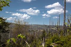 Lusen Waldsterben (Waupee08) Tags: forest bayern nationalpark woods natur bark karl wald bäume treestump copse bayerischerwald baumrinde lusen bloch bergwald baumstumpf waldsterben baumgruppe naturwald treearea waldgebiete karlbloch