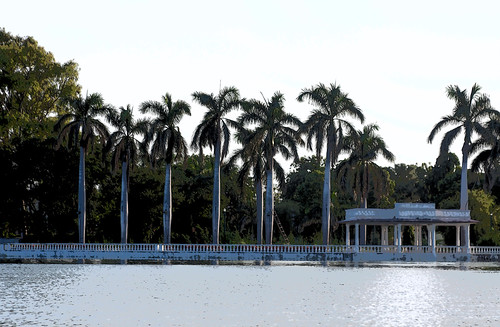 Cartoon - Palm trees and shore structure on the Nehru Park in the Fateh Sagar lake in Udaipur