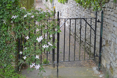Clematis and Gate
