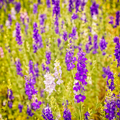 Flowers (Purple & White) (Warriorwriter) Tags: life flowers plants color floral garden saturated vibrant bloom buds growing