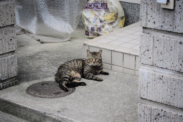Today's Cat@2013-06-17