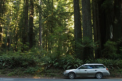 Subi and the Ferns (Tatiana Gettelman) Tags: california road ca trees tree green nature car forest drive photo woods natural image picture pic x adventure photograph 200 huge outback redwoods ferns subatu