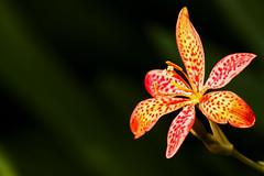 IMG_1755 (judd.furlong) Tags: flower canon eos comozoo