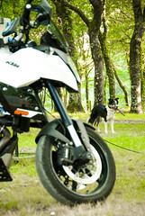 Spain_Bike trip_48 (jjay69) Tags: travel vacation dog holiday bike fun spain europe sheepdog north transport relaxing engine fast hobby supermoto ktm motorbike spanish motorcycle vtwin powerful motorbikes interest smt enjoyment pleasure touring northernspain 1000cc greathandling 2cylinders supermotot ktmsmt