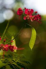 Waimea Valley Falls Botanical Gardens (FroseN in Time) Tags: flowers plants nature photography hawaii oahu botanicalgardens