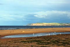 Redcar beach (overthemoon) Tags: uk greatbritain england seascape seaweed beach pool birds landscape unitedkingdom northeast redcar huntcliff