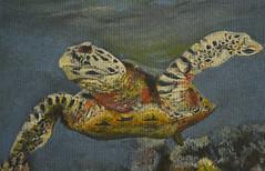 turtle 1 (amanda.parker377) Tags: sea water coral turtle pasteldrawing derwentpastels