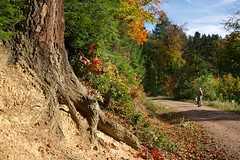 Autumn beholder (Nekr0n) Tags: leica blue autumn red sky sun man colour tree green digital germany deutschland golden day x 24 28 24mm root freiburg schwarzwald blackforest asph f28 beholder x1 compactcamera xseries elmarit primelens сolour imbreisgau leicax1gallery