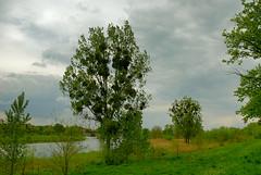 Nad kanaem Odry (Hejma (+/- 4200 faves and 1,3 milion views)) Tags: trees green nature clouds landscape spring poland polska natura channel zielony wiosna odra chmury kana drzewa krajobraz