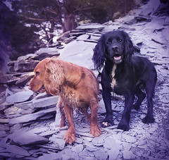 Ruby and friend (High Peak and Lowland) Tags: photography jim ennis nikond610