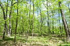 The Morton Arboretum (Ray Horwath) Tags: trees nature illinois nikon arboretum nikkor chicagoland lisle mortonarboretum nikkorlens horwath d700 rayhorwath nikkor20mmf28lens