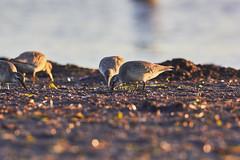 Darss (Basel101) Tags: deutschland darss meer ostsee ahrenshoop prerow urlaub baden vogel vögel erholung