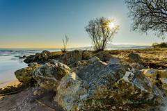 Riverside (old.pappous) Tags: againstthelight beach boulders contrejour earlymorninglight goldenhour landscape lonetree lowsun rocks seascape sunburst starburst