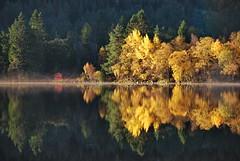Gylden haust -|- Golden autumn (erlingsi) Tags: autumn høst haust rotevatn volda sunnmøre noreg norway lines trees reflection golden gyllen mist dis autumnlight platinumheartaward