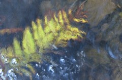(Edinburgh Nette ...) Tags: water abstracts ferns rivers flow movement submerged ribbet