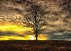 Sunset on Fire. (Igor Danilov Philadelphia) Tags: fire sky sunset sun down light clouds tree dead beautiful still burning onfire igor danilov igordanilov