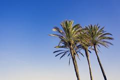 A better place, a better time! (AdaMoorePhotography) Tags: valencia palms tree blue sky green beach nikon 18105mm d7200 spain sunshine