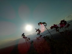 Sun rays ☀ (igor.simjanovski) Tags: sun rays mountain tree flowers walk awesomeness