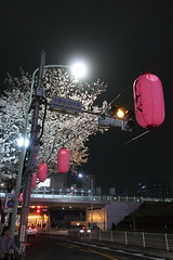 IMG_0525 (digitalbear) Tags: canon powershot g9x markii mark2 nakano dori sakura cherry blossom blooming fullbloom tokyo japan yozakura hanami