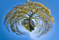 Autumn tree - Falling (Ian@NZFlickr) Tags: autumn fall nz tree polar coordinates dunedin otago