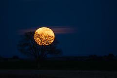 Luna llena (Roberto_48) Tags: luna moon llena arbol
