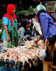 Chicken seller (A. Yousuf Kurniawan) Tags: colourstreetphotography colourful colourstreet seller market traditionalmarket streetphotography streetlife people job banjarbaru indonesia moslem dailylife urbanlife