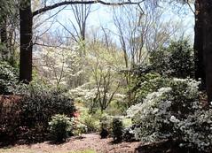 garden of light (Artist Victoria Watson) Tags: flowers trees nature spring garden beautiful flora easter explored