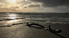 driftwood (HJK Photography) Tags: backlight shore iphoneography iphone northsea nature clouds sea driftwood