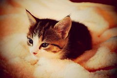 Kitty 0003-007 (mcg0011) Tags: kitty cuchito gatito mascota pet manuelcarrasco felino inexplore explore