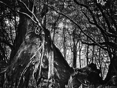 和ごん2 les grands arbres, mon archipel