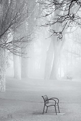 enveloped in Loneliness (marianna_a.) Tags: fog sleep loneliness empty bench man seated sitting alone faraway distant monochrome blackandwhite bw p1180736 mariannaarmata spring park trump