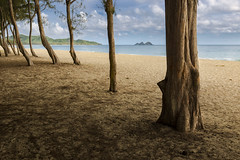 Beach from the forest (andrewpmorse) Tags: hawaii beach forest light sidelight trees bark sand naturalframe shadows canon 6d 1635mmf4l landscape landscapes sherwoodforest waimanalobay
