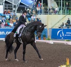 17429_Sydney_CDI_GPFS_0053.jpg (FranzVenhaus) Tags: athletes dressage australia equestrian riders horses ponies rug siec nsw sydney newsouthwales aus