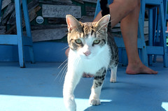 Untitled (derosatony) Tags: bvi british virgin islands island boat boating water ocean carribean color cloud clouds green plants bathrooms toilet hot weather summer spring 90 80 70 60 50 40 30 20 21 tag me bro rasta mountains cat meow kitty kit cats tabby white