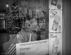 International Postage (goofcitygoof) Tags: picmonkey waterice cats souvenirs