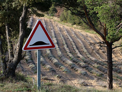 Attention !!!! (Rollerphilc) Tags: canon humour panneau lavande nature champs provence