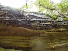 Cumberland Trail Run (31 of 34) (aaron_rinn) Tags: tenessee tree toppers team challenge 2017 cumberland trail