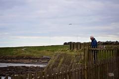 DSC_0162 (prettyredglasses.com) Tags: seatonsluice beach englishcoast northeastengland seaside nature exploreearth lighthouse stmaryslighthouse seasideview